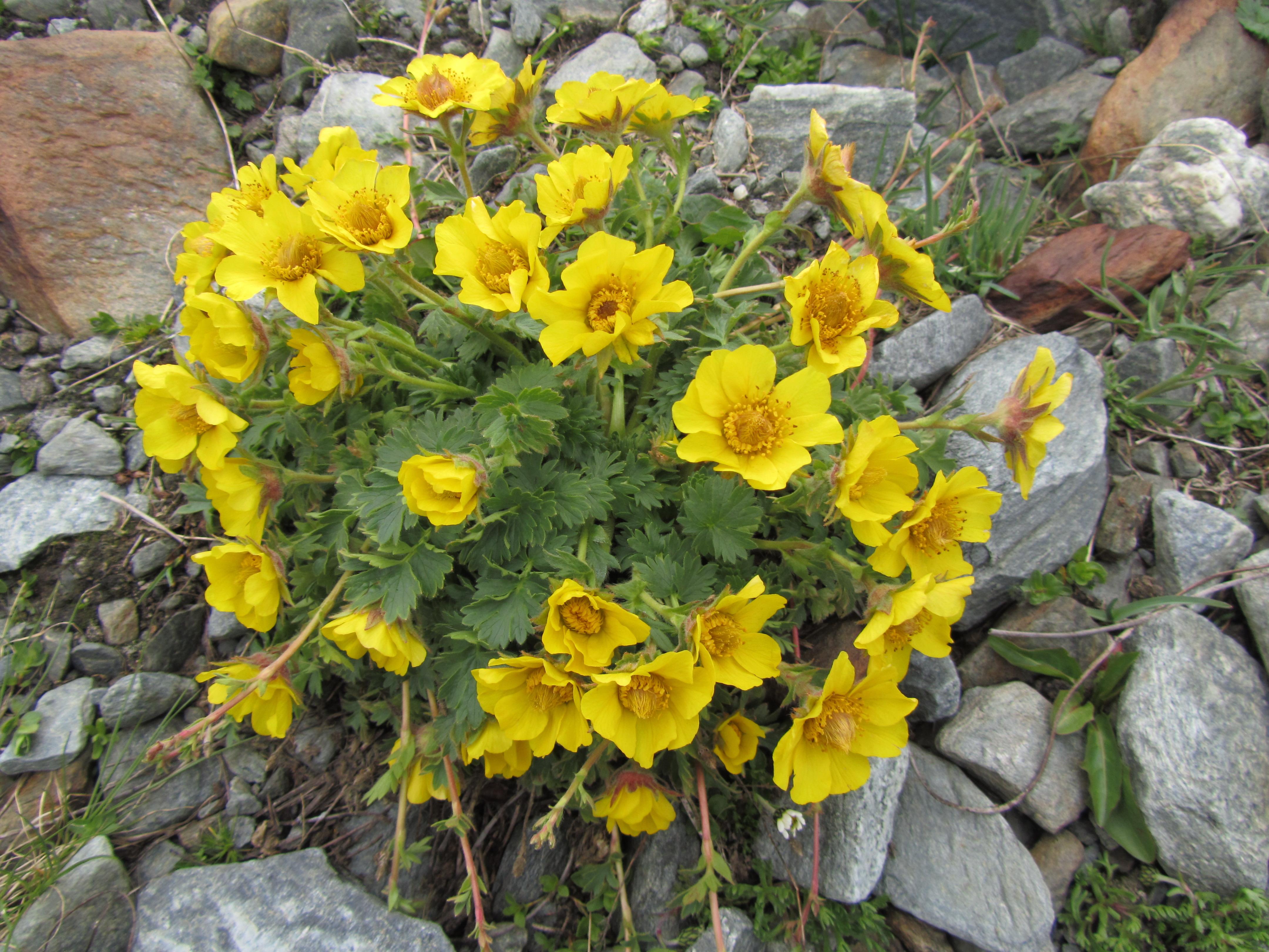 FloraeFaunaIMG_0075
