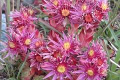 FloraeFaunaIMG_0066