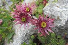 FloraeFaunaIMG_0110
