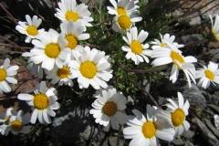 FloraeFaunaIMG_0336